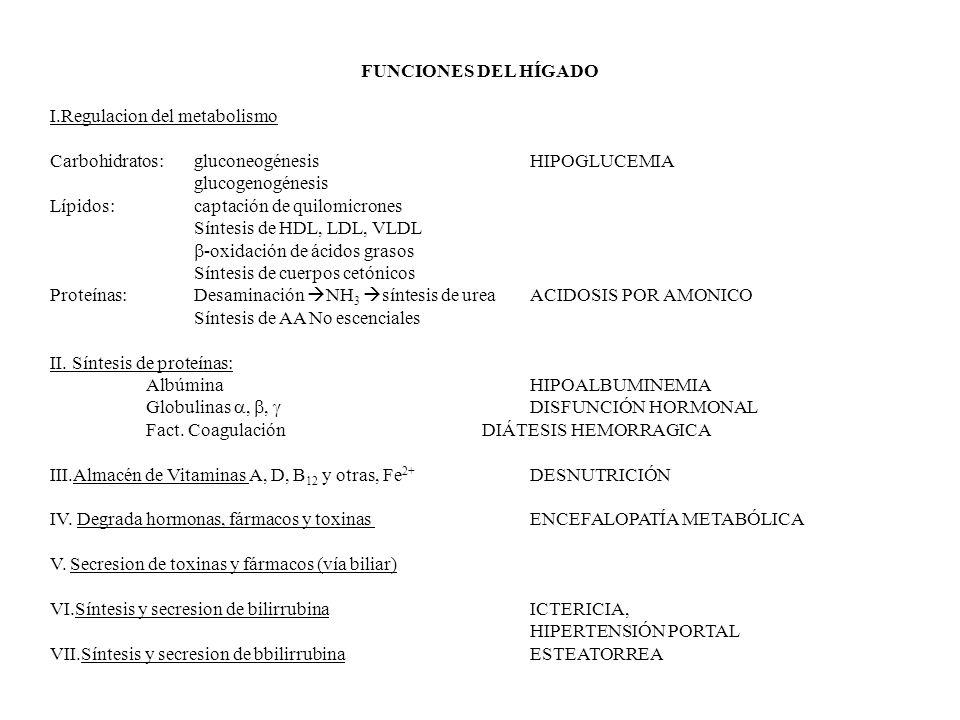 FUNCIONES DEL HÍGADO I.Regulacion del metabolismo. Carbohidratos: gluconeogénesis HIPOGLUCEMIA.