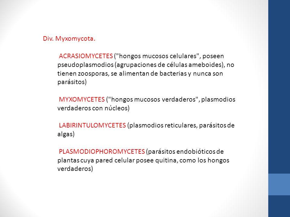 Div. Myxomycota.