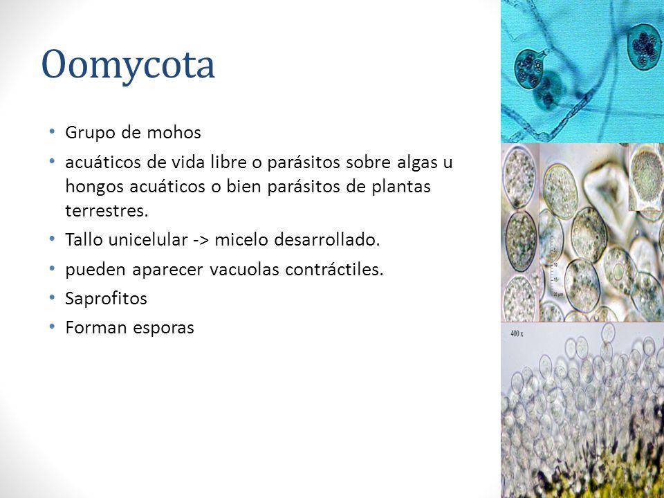 Oomycota Grupo de mohos