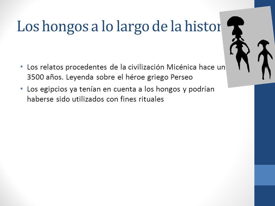 Los hongos a lo largo de la historia.