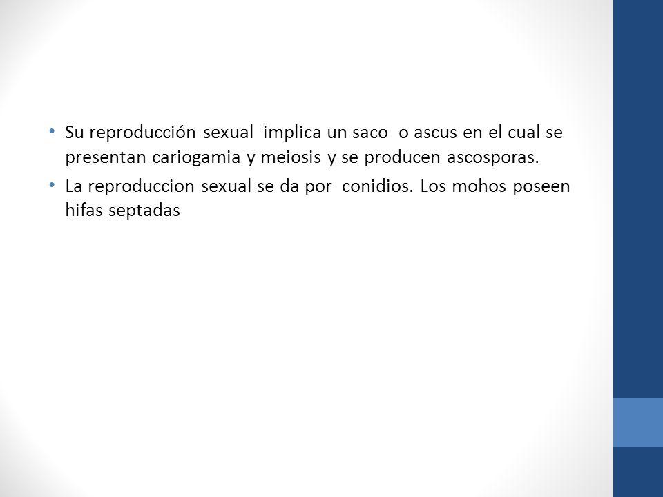 Su reproducción sexual implica un saco o ascus en el cual se presentan cariogamia y meiosis y se producen ascosporas.