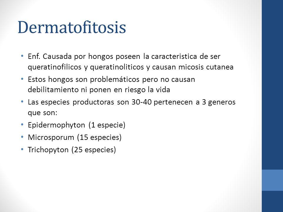 Dermatofitosis Enf. Causada por hongos poseen la caracteristica de ser queratinofilicos y queratinoliticos y causan micosis cutanea.