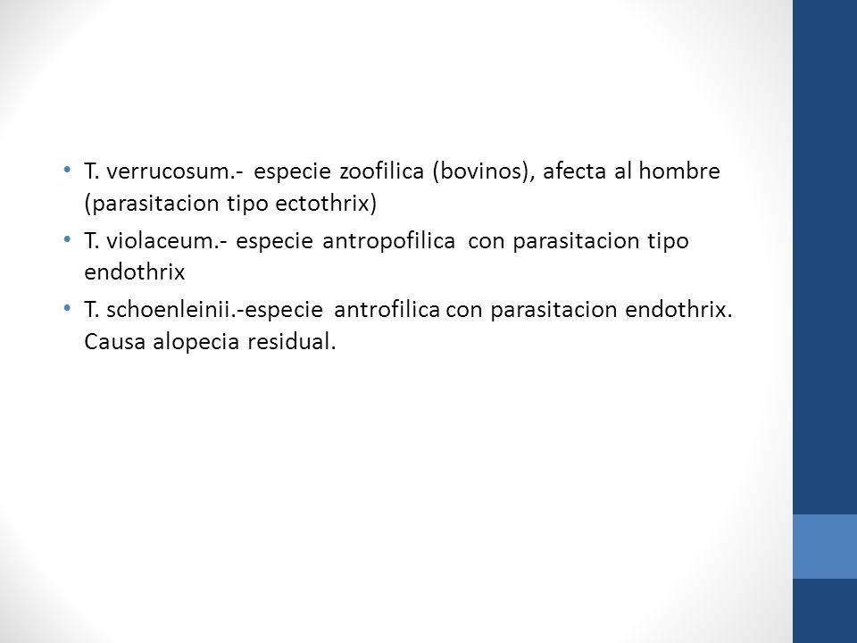 T. verrucosum.- especie zoofilica (bovinos), afecta al hombre (parasitacion tipo ectothrix)