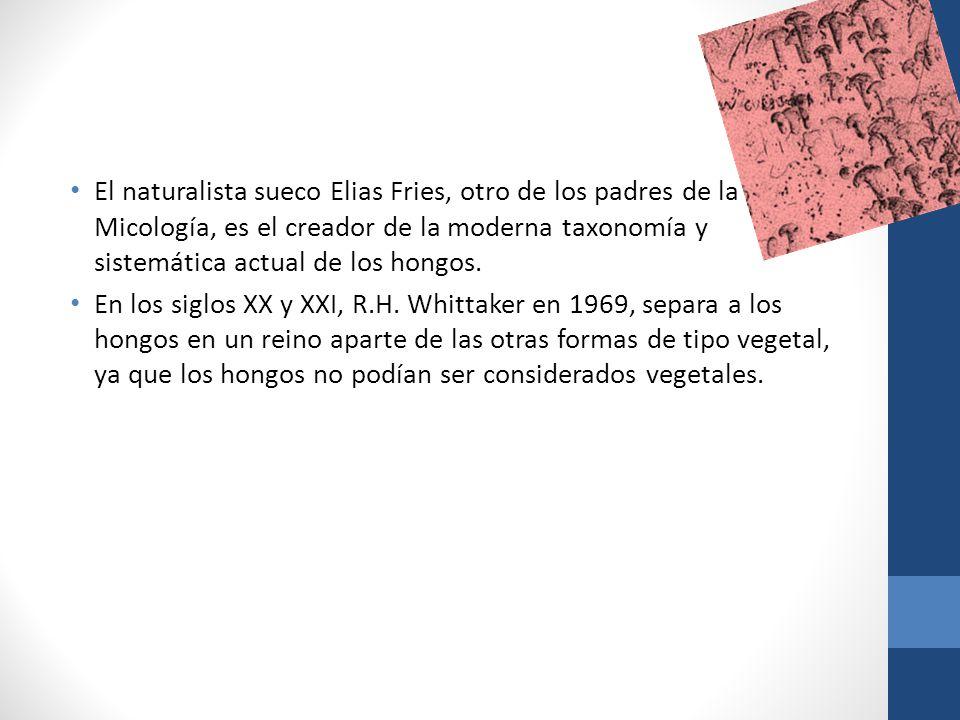 El naturalista sueco Elias Fries, otro de los padres de la Micología, es el creador de la moderna taxonomía y sistemática actual de los hongos.