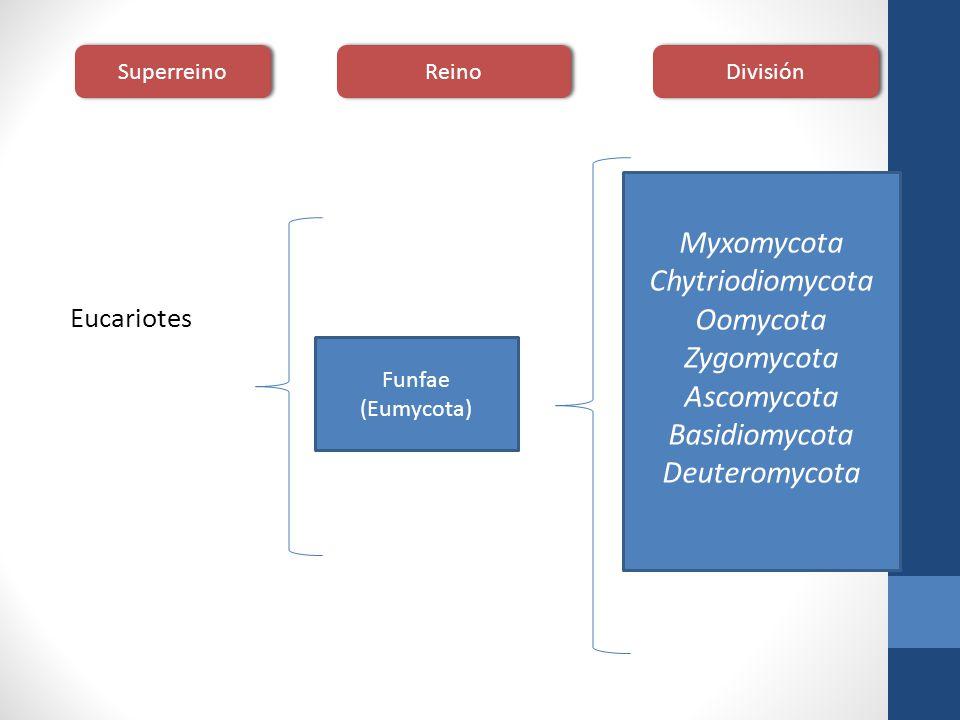 Myxomycota Chytriodiomycota Oomycota Zygomycota Ascomycota