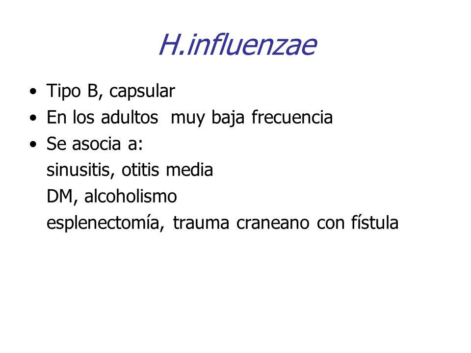 H.influenzae Tipo B, capsular En los adultos muy baja frecuencia