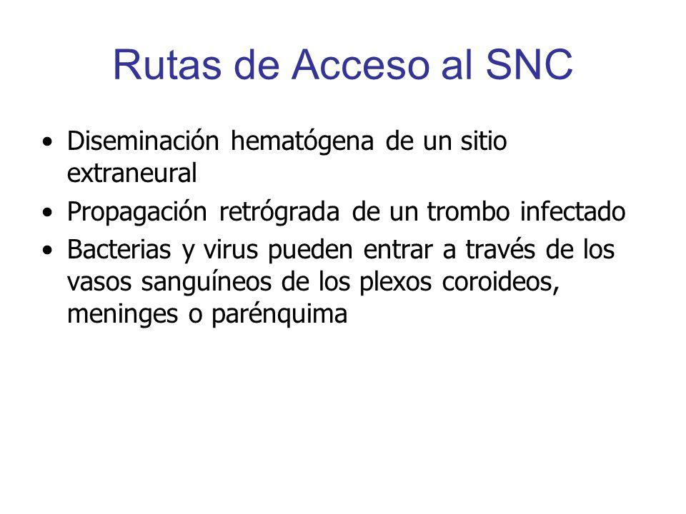 Rutas de Acceso al SNC Diseminación hematógena de un sitio extraneural