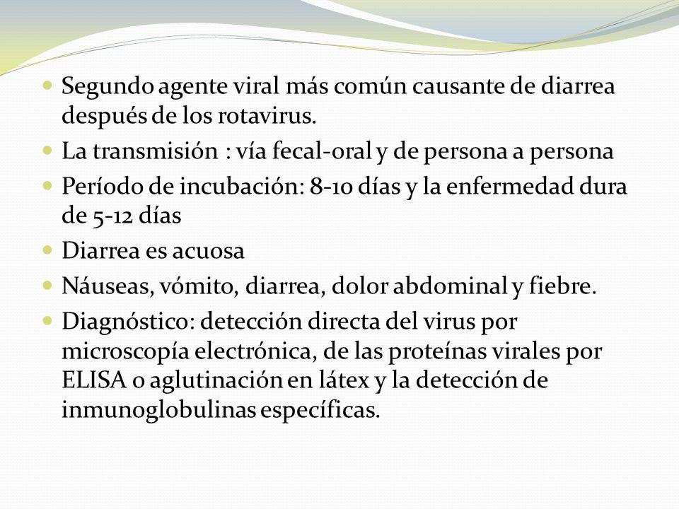 Segundo agente viral más común causante de diarrea después de los rotavirus.