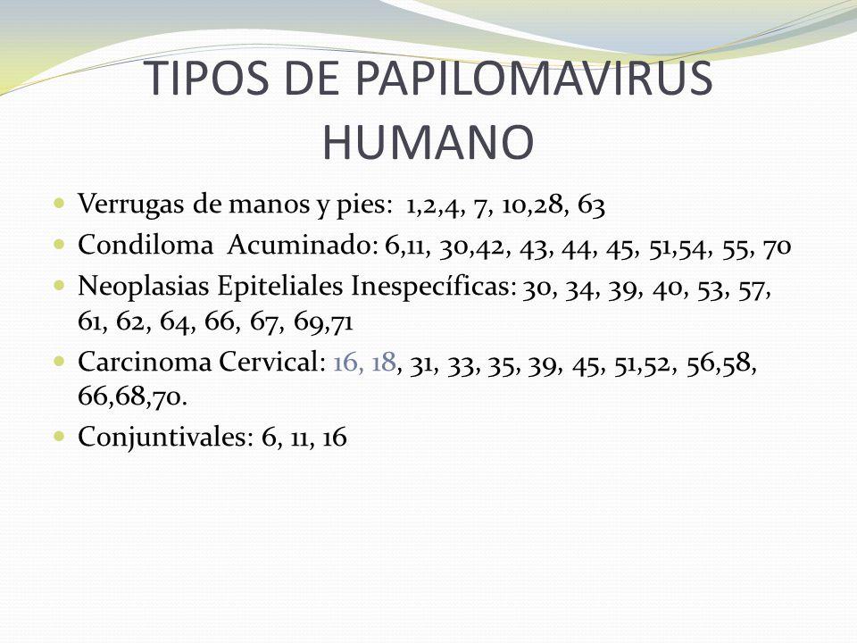 TIPOS DE PAPILOMAVIRUS HUMANO