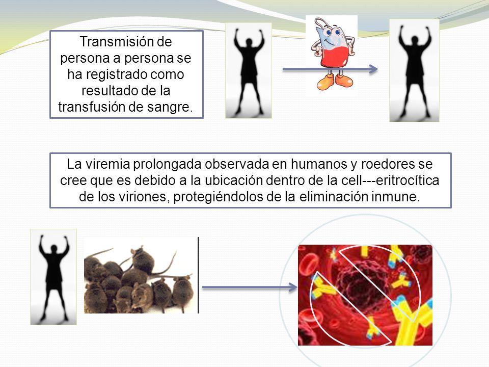 Transmisión de persona a persona se ha registrado como resultado de la transfusión de sangre.