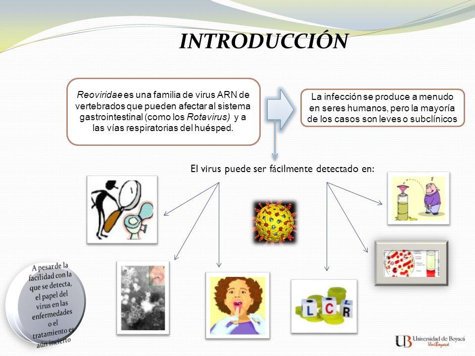INTRODUCCIÓN El virus puede ser fácilmente detectado en: