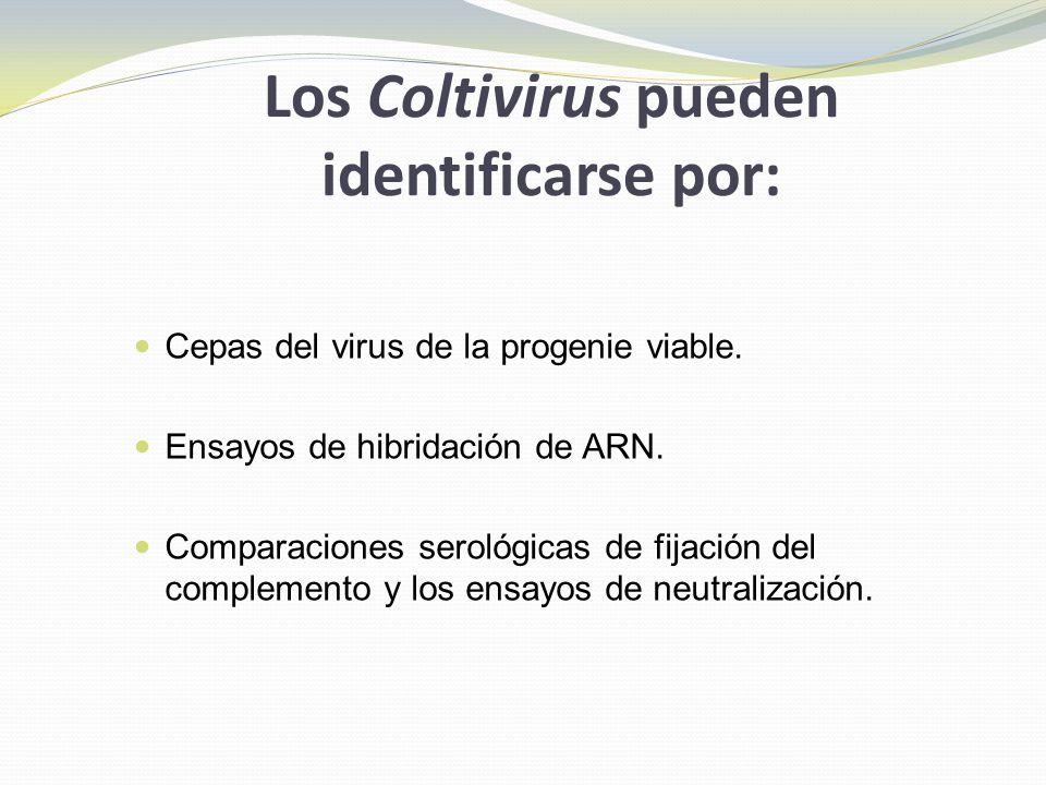 Los Coltivirus pueden identificarse por: