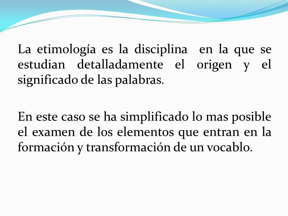Contemporáneo Origen En La Anatomía Componente - Anatomía de Las ...