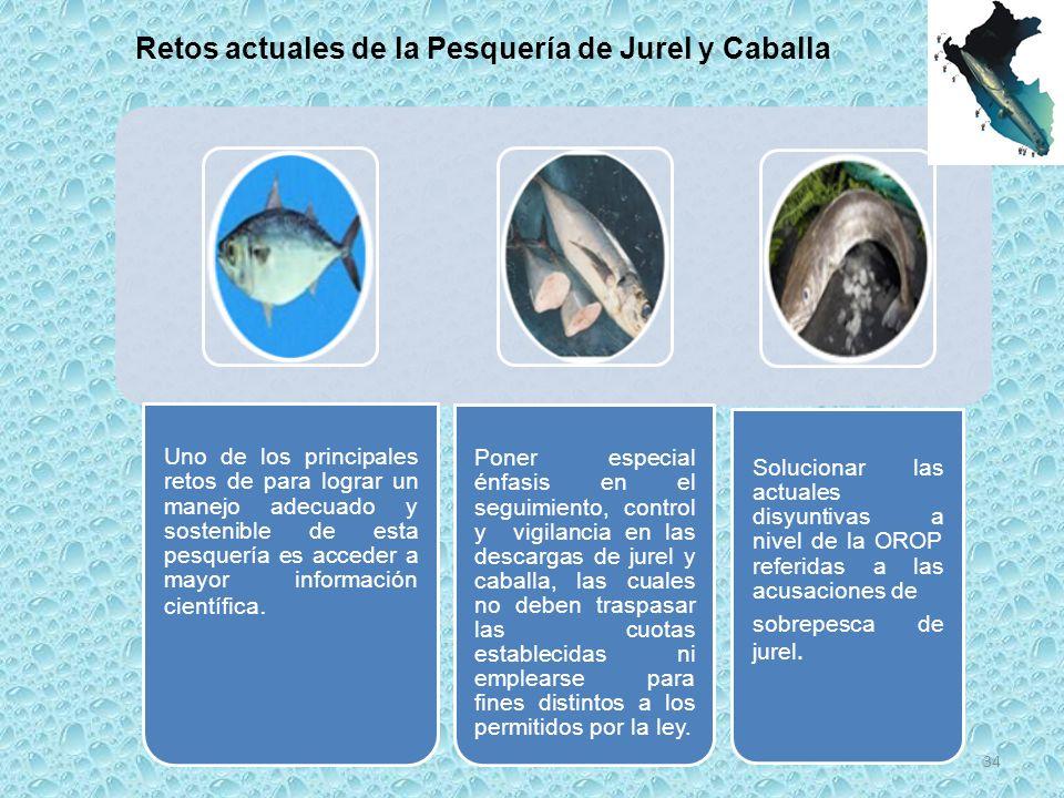 Retos actuales de la Pesquería de Jurel y Caballa
