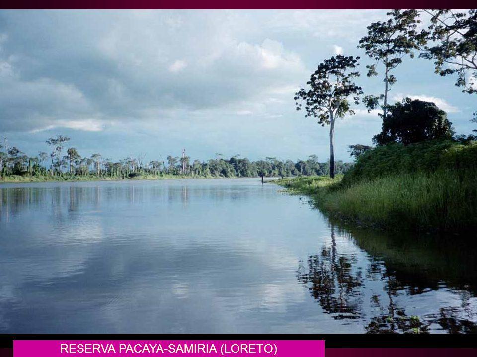 RESERVA PACAYA-SAMIRIA (LORETO)