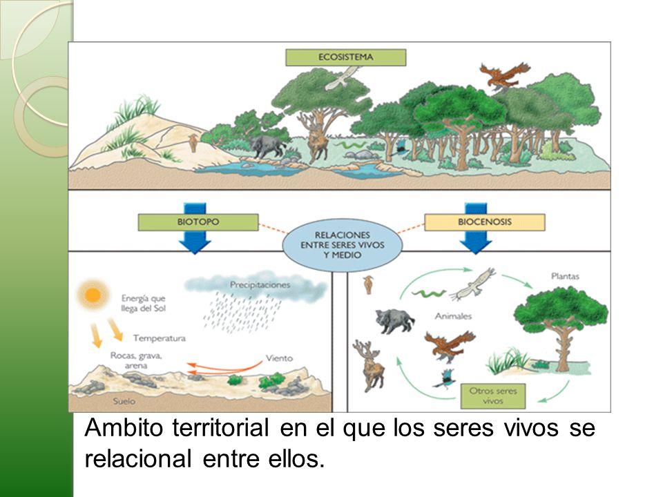 Ambito territorial en el que los seres vivos se relacional entre ellos.