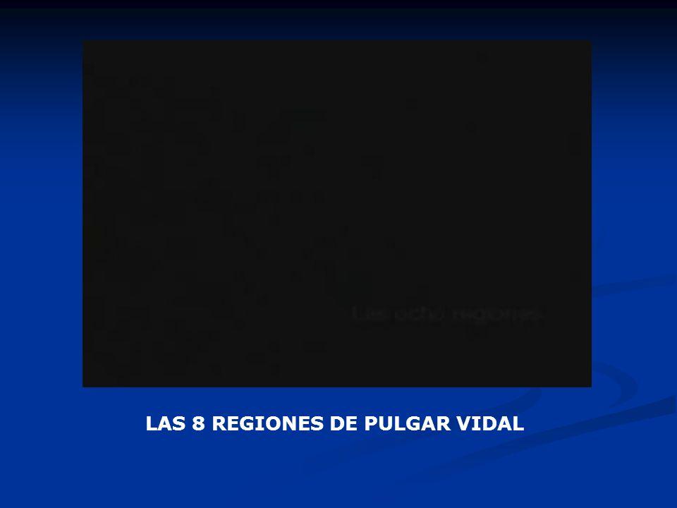 LAS 8 REGIONES DE PULGAR VIDAL