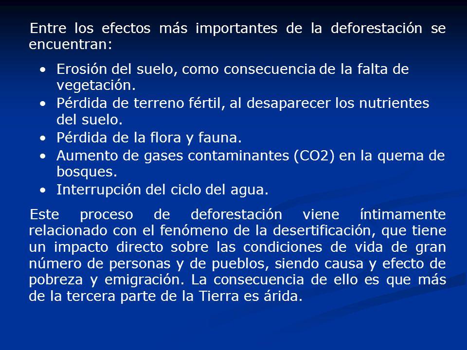 Entre los efectos más importantes de la deforestación se encuentran:
