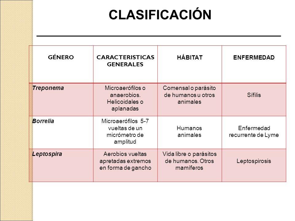 CLASIFICACIÓN ____________________________________________________________. GÉNERO. GÉNERO. CARACTERISTICAS.