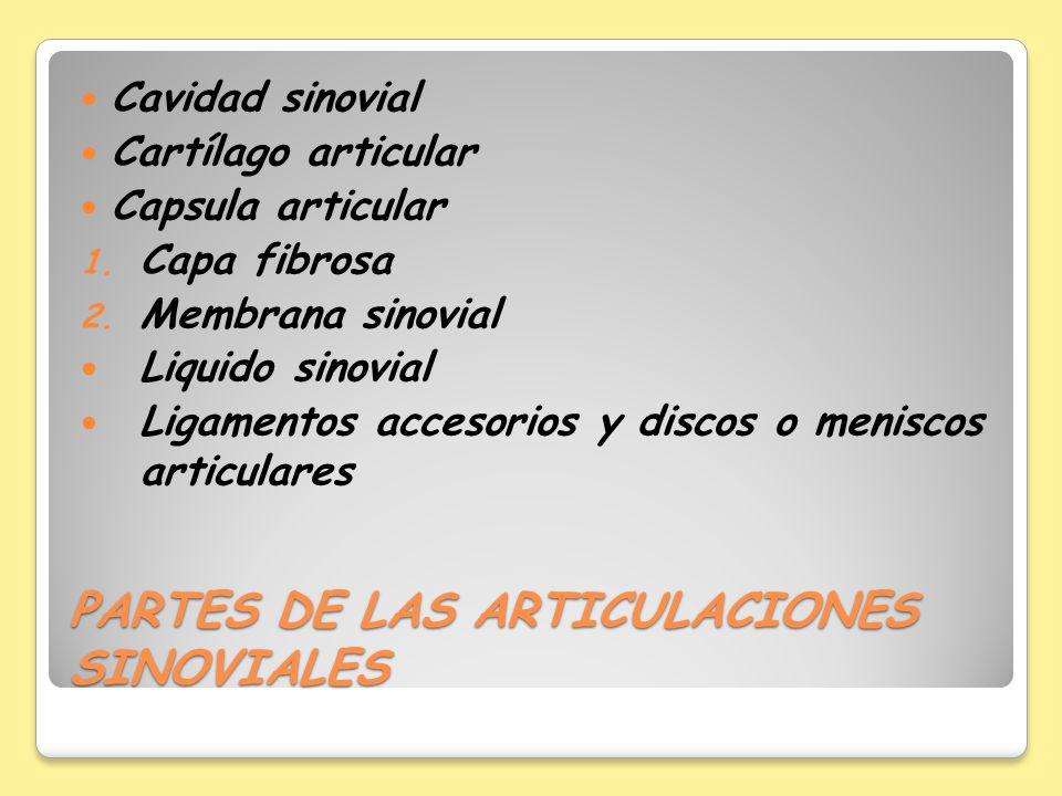 PARTES DE LAS ARTICULACIONES SINOVIALES