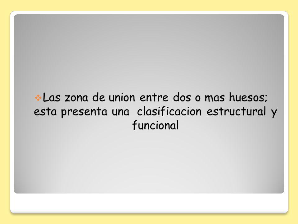 Las zona de union entre dos o mas huesos; esta presenta una clasificacion estructural y funcional