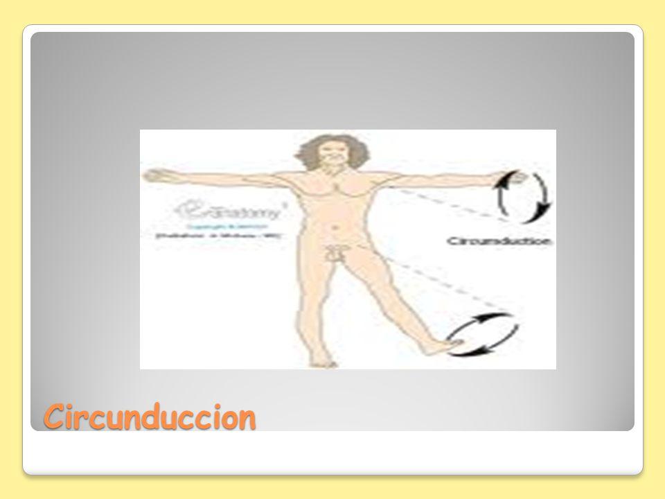 Circunduccion