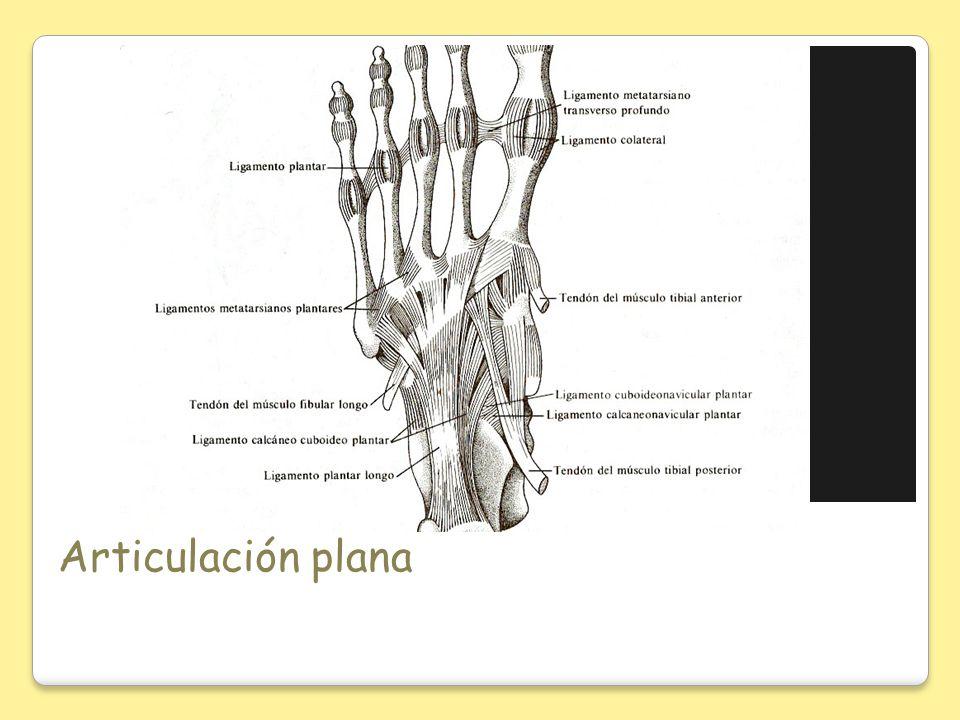 Articulación plana
