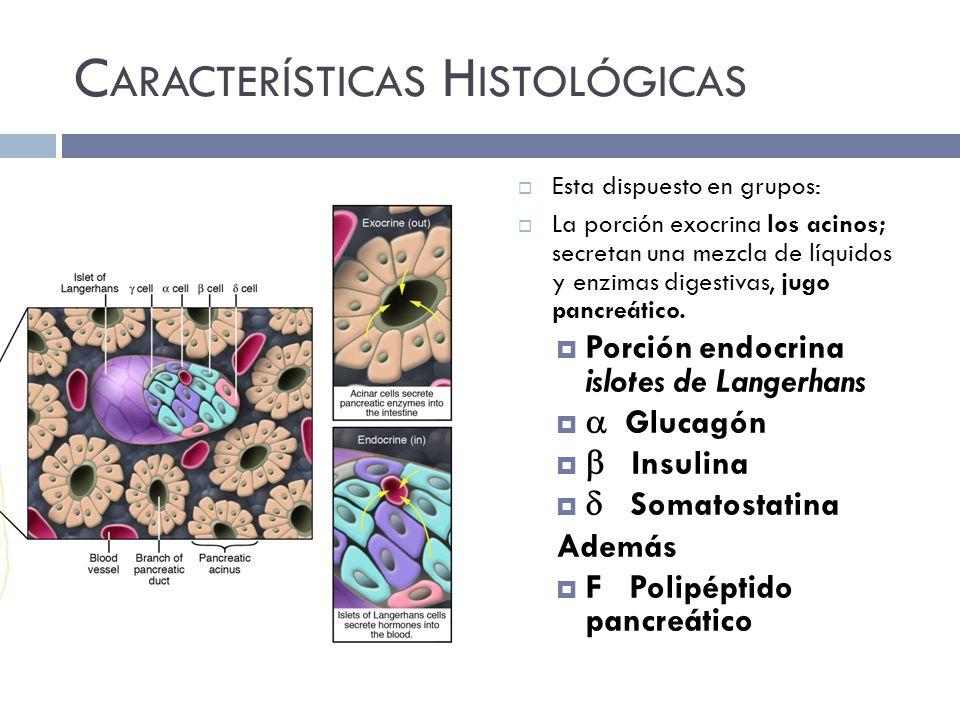 Características Histológicas
