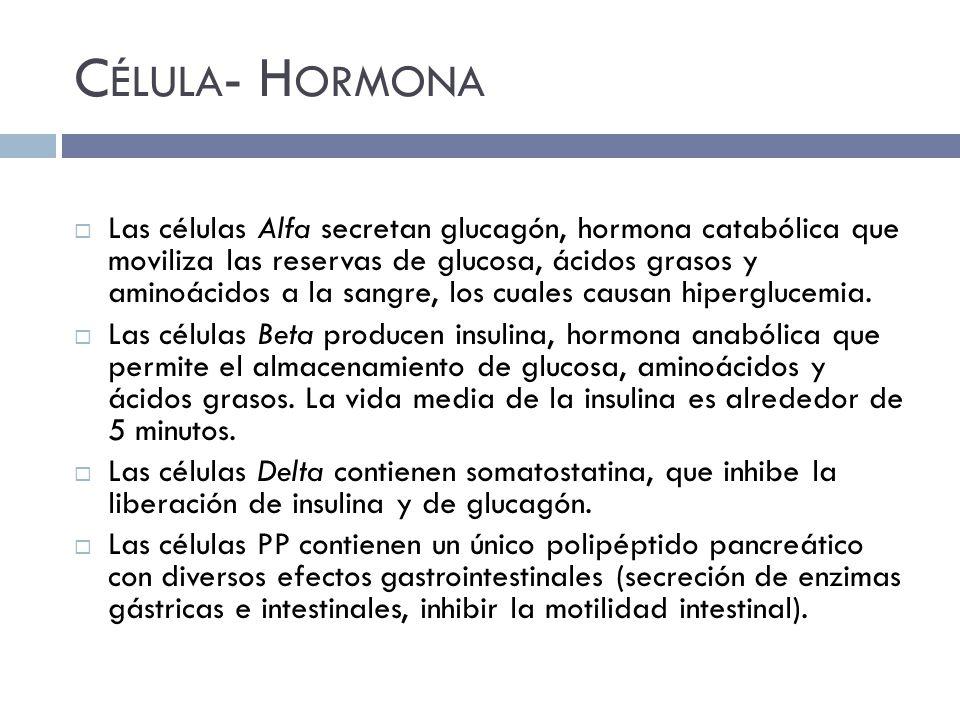 Célula- Hormona