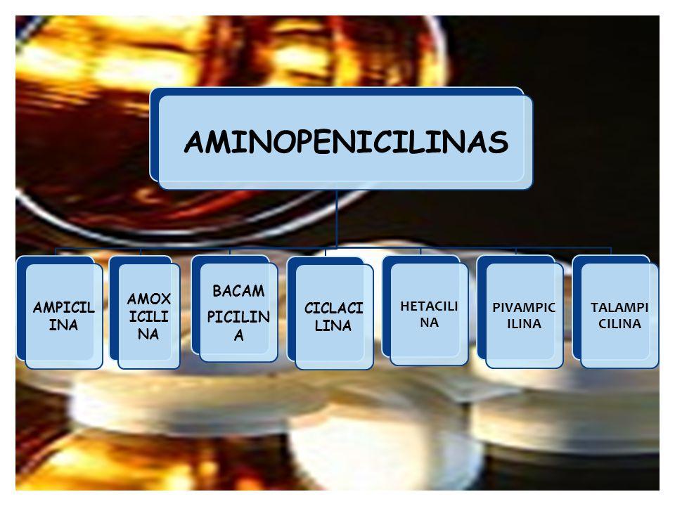 AMINOPENICILINAS BACAM PICILINA HETACILINA PIVAMPICILINA TALAMPICILINA