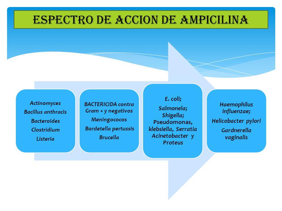 ESPECTRO DE ACCION DE AMPICILINA