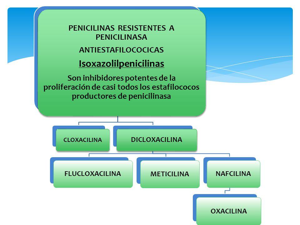 PENICILINAS RESISTENTES A PENICILINASA Isoxazolilpenicilinas