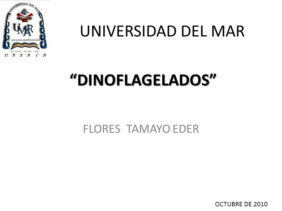 UNIVERSIDAD DEL MAR DINOFLAGELADOS FLORES TAMAYO EDER
