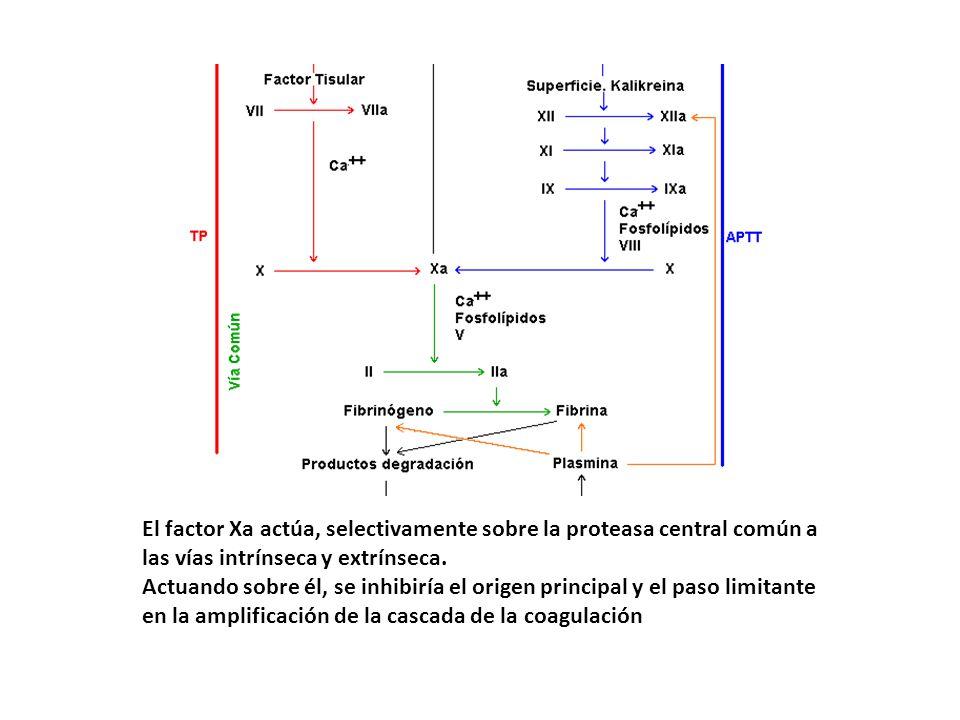 El factor Xa actúa, selectivamente sobre la proteasa central común a las vías intrínseca y extrínseca.