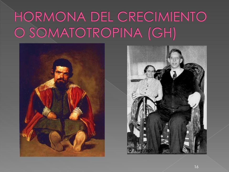 HORMONA DEL CRECIMIENTO O SOMATOTROPINA (GH)