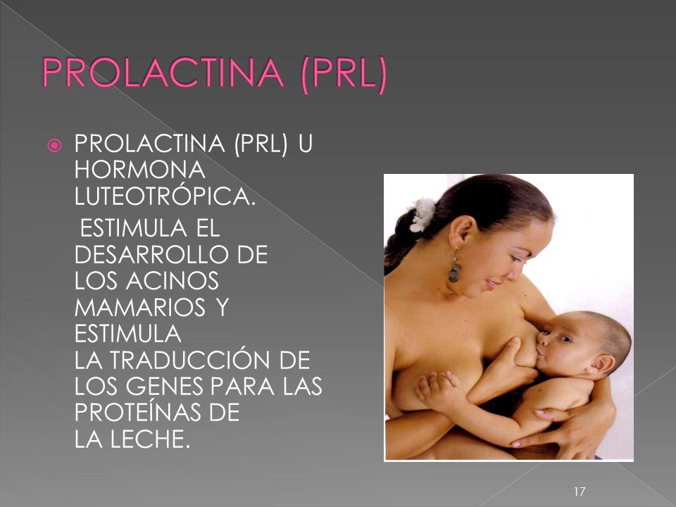 PROLACTINA (PRL) PROLACTINA (PRL) U HORMONA LUTEOTRÓPICA.