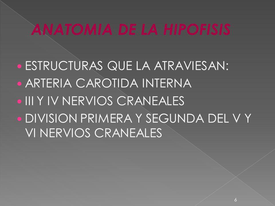 ANATOMIA DE LA HIPOFISIS