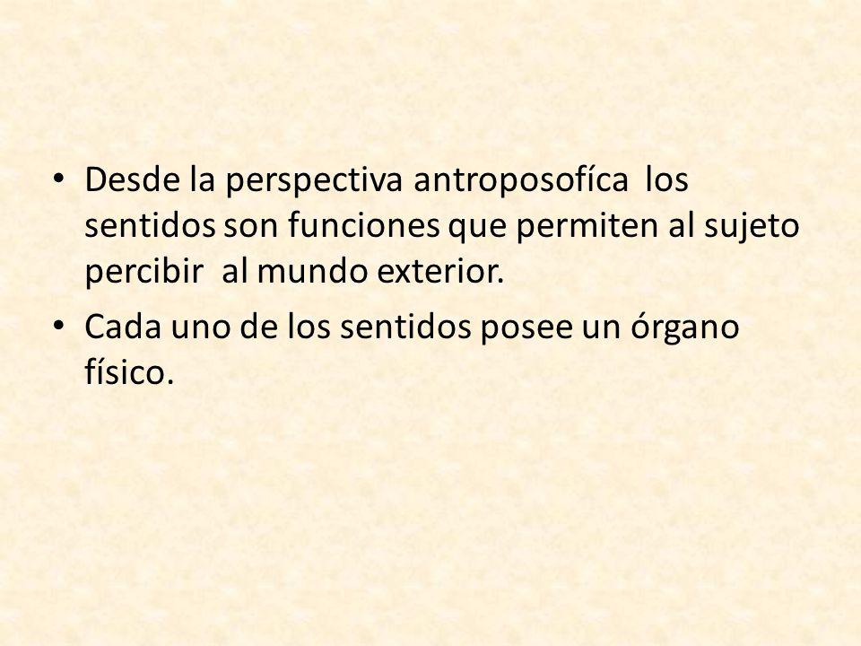 Desde la perspectiva antroposofíca los sentidos son funciones que permiten al sujeto percibir al mundo exterior.