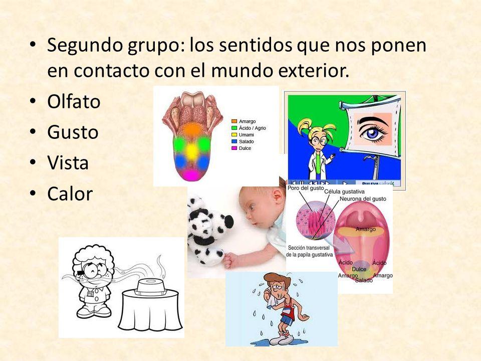 Segundo grupo: los sentidos que nos ponen en contacto con el mundo exterior.