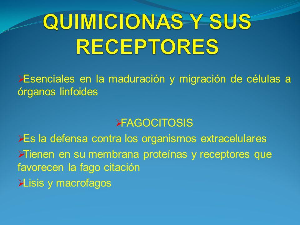 QUIMICIONAS Y SUS RECEPTORES