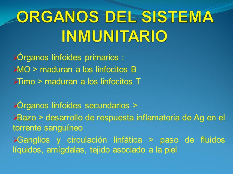 ORGANOS DEL SISTEMA INMUNITARIO