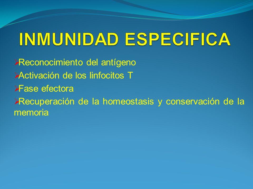 INMUNIDAD ESPECIFICA Reconocimiento del antígeno