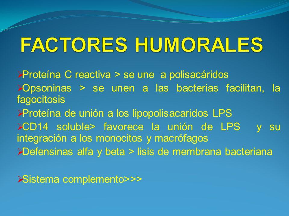 FACTORES HUMORALES Proteína C reactiva > se une a polisacáridos