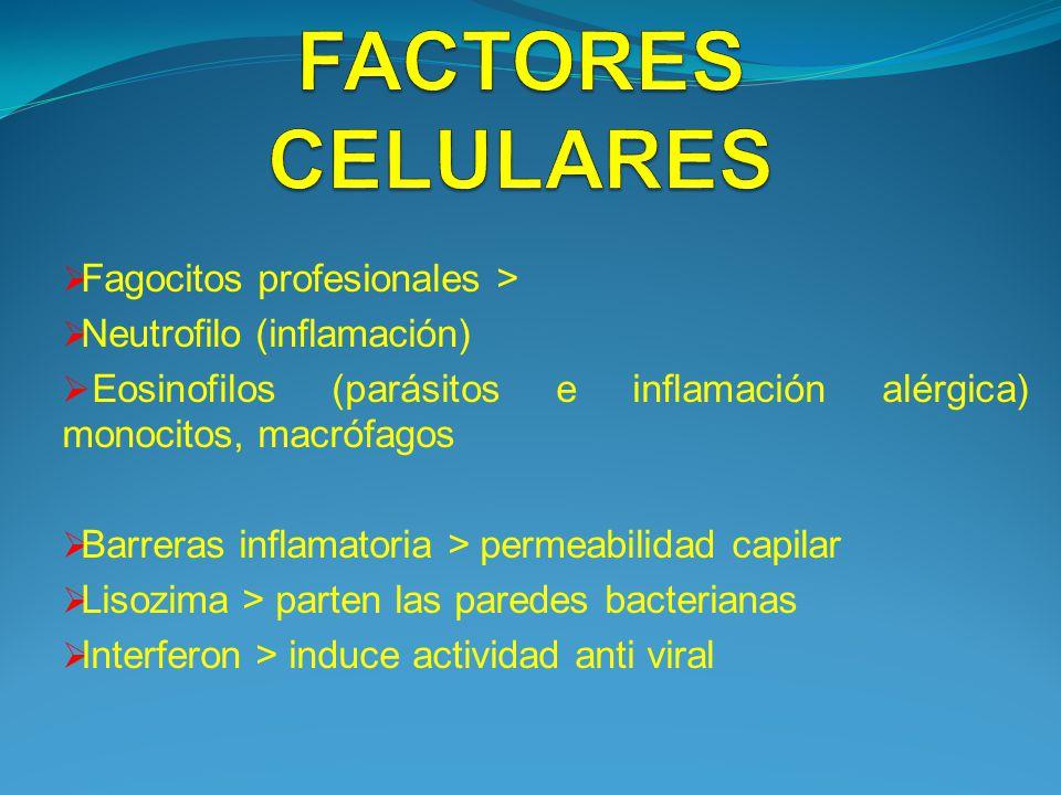 FACTORES CELULARES Fagocitos profesionales >