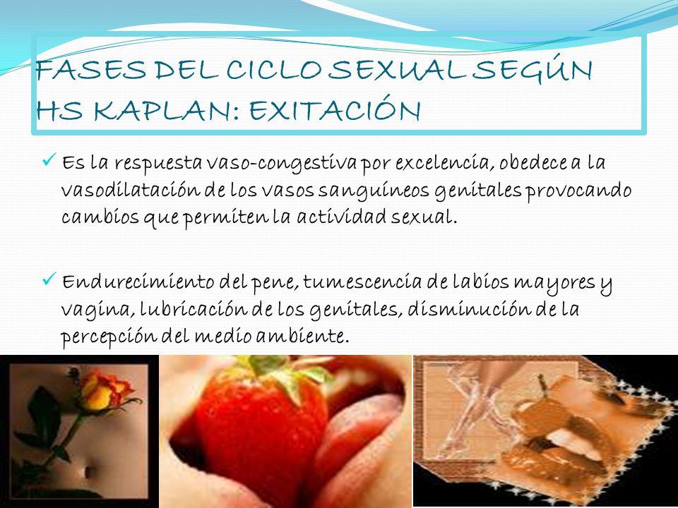 FASES DEL CICLO SEXUAL SEGÚN HS KAPLAN: EXITACIÓN