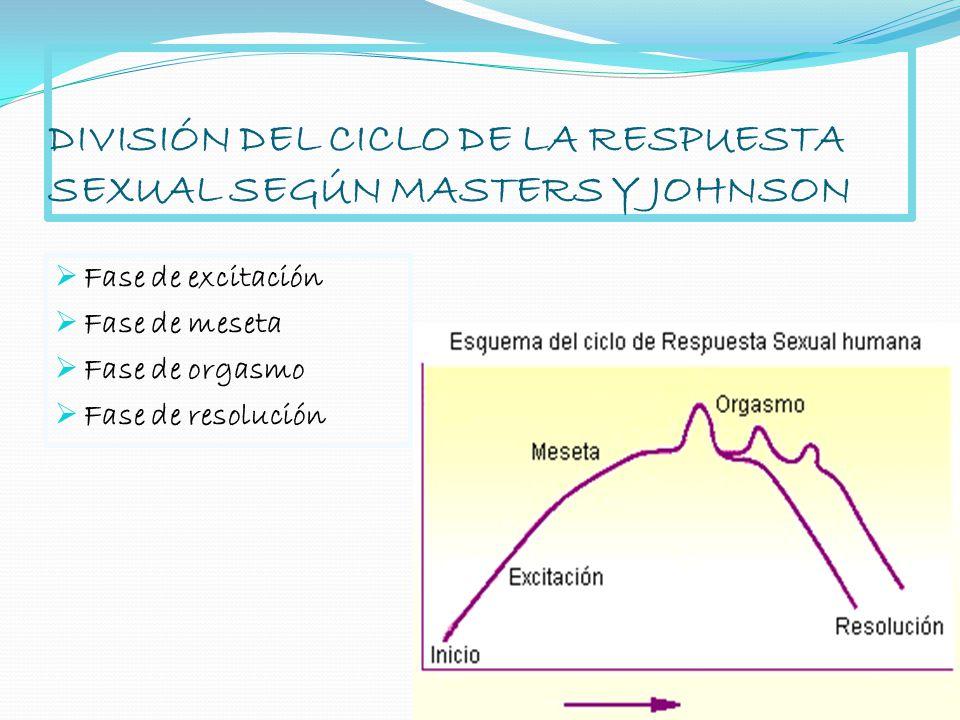 DIVISIÓN DEL CICLO DE LA RESPUESTA SEXUAL SEGÚN MASTERS Y JOHNSON