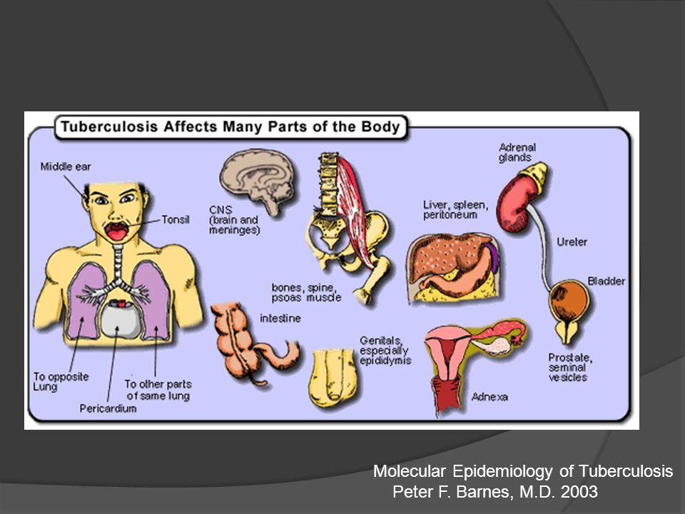 Molecular Epidemiology of Tuberculosis
