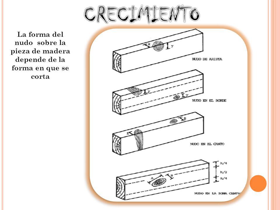 CRECIMIENTO La forma del nudo sobre la pieza de madera depende de la forma en que se corta