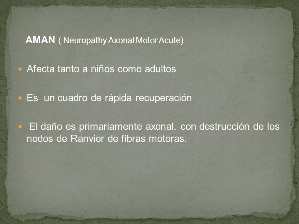 AMAN ( Neuropathy Axonal Motor Acute)