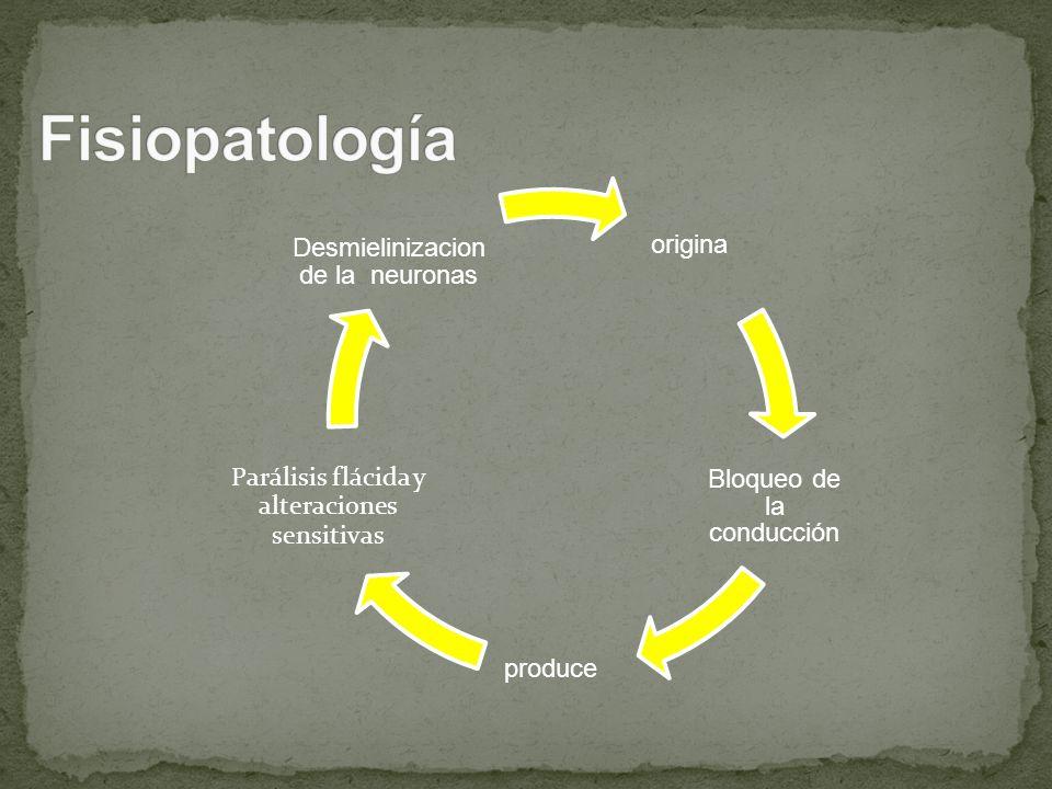 Fisiopatología origina Bloqueo de la conducción produce